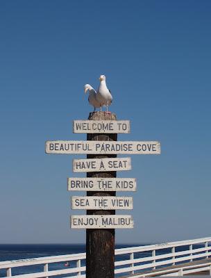 Seagull welcome to Paradise Cove in Malibu