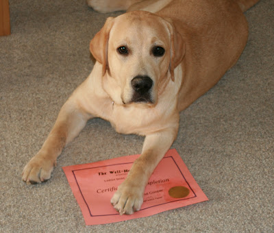Cooper's dog training certificate at 7 months