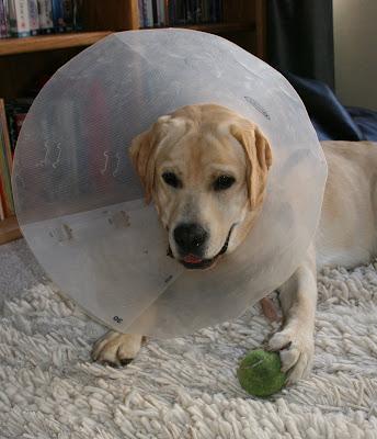 Recuperating cone head Cooper