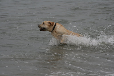 Pup powers through the ocean at Long Beach