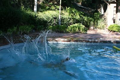 Cooper diving in