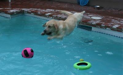 Diving Cooper