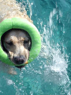 cooper's pool fun
