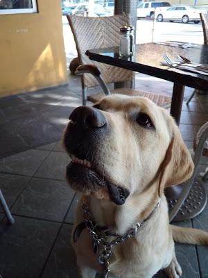 Expectant Cooper at Basix restaurant