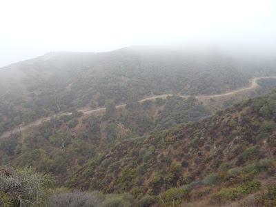 Runyon Canyon after rain October 2009
