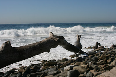 Sycamore Cove driftwood