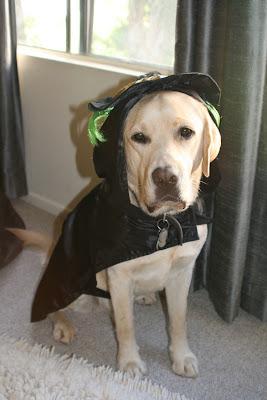 Halloween Labrador Cooper