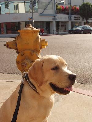 Dog and hydrant on walk