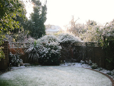 Snowy West London garden