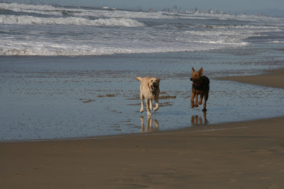 Dogs playing at Huntington Beach