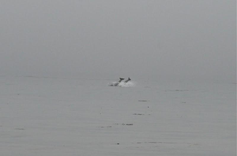 Dolphin tails Hendry's Beach