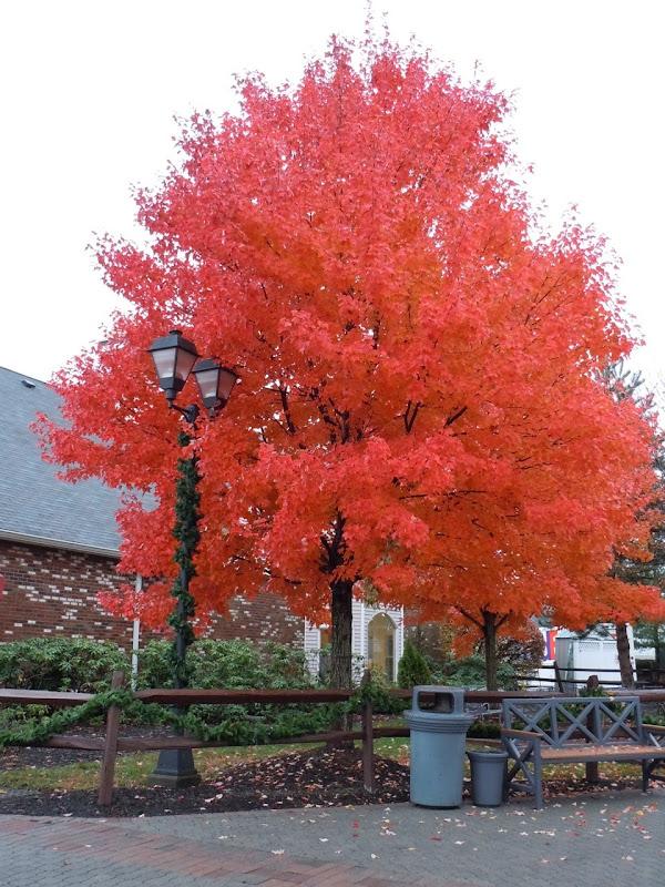 Woodbury Common trees