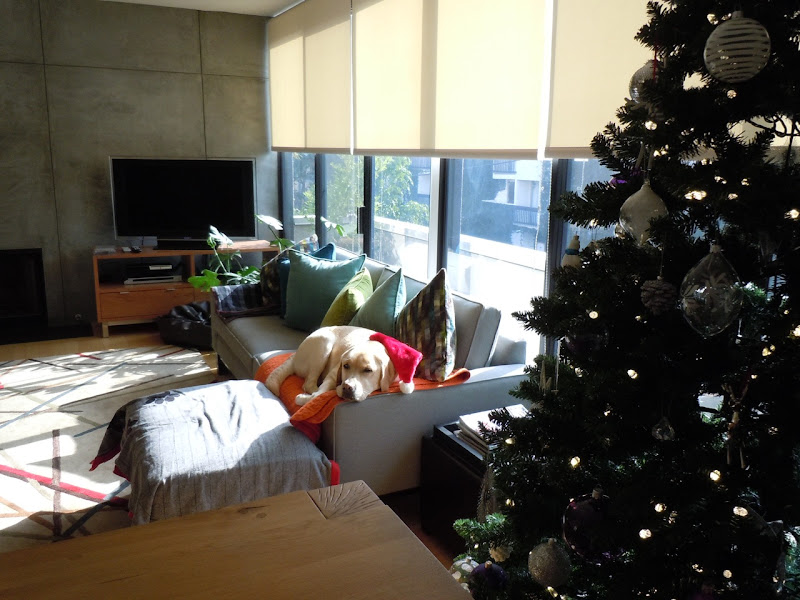 Sleepy Labrador Christmas Day
