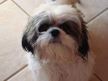 Gordie...Chuckie's best friend