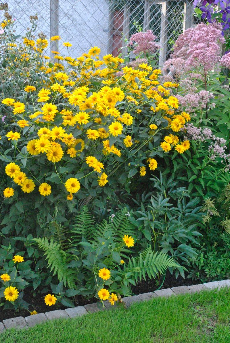 gul blomma trädgård
