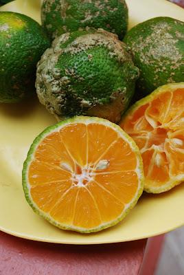 Mac's Miscellany: The Limón Mandarina / Rangpur Lime