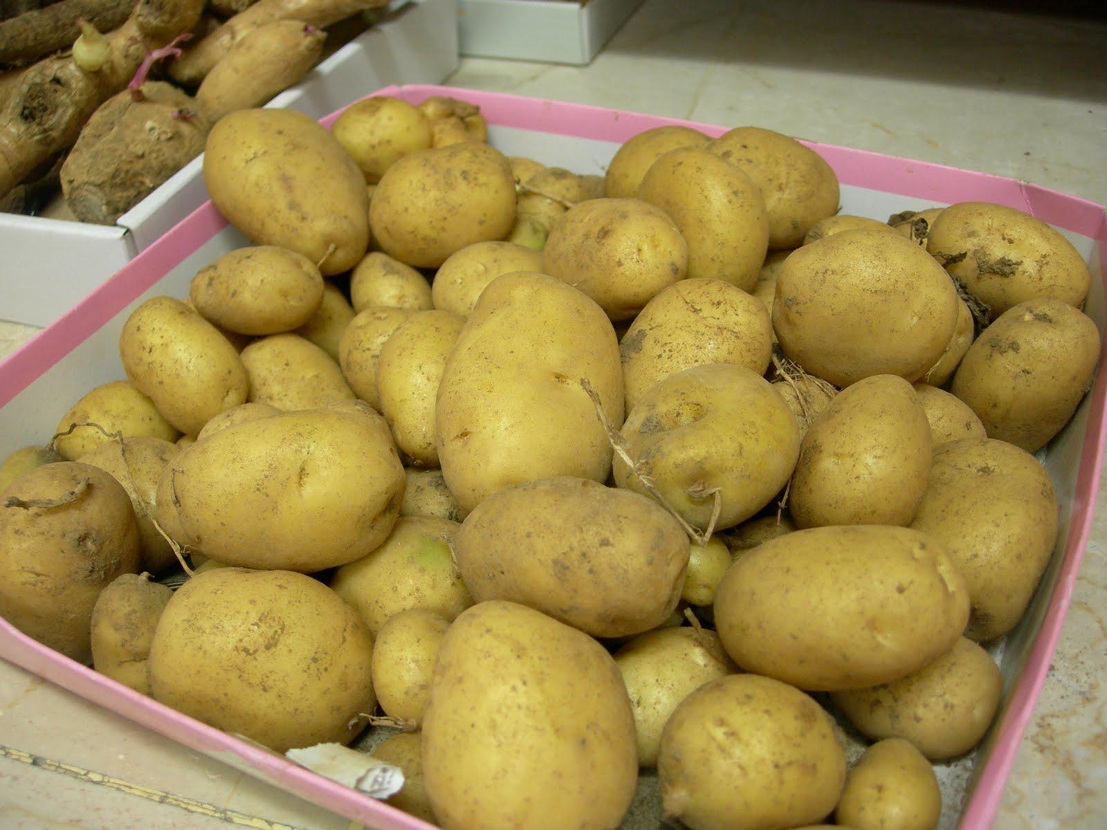 馬鈴薯 | [組圖+影片] 的最新詳盡資料** (必看!!) - www ...