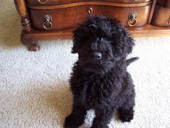 Murphy, Sadie's dog