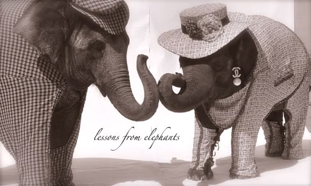 lessons from elephants