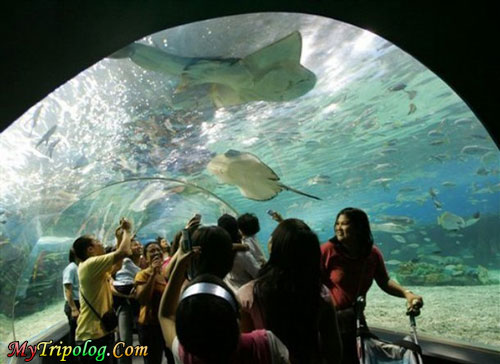 oceanar park oceanarium entrance fee