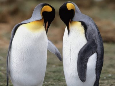 funny penguins. Crazy Funny Pictures