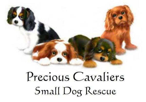 Precious Cavaliers Small Dog Rescue