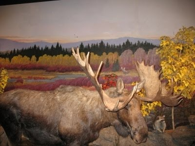 Cabela's Big Game
