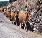 Em fila