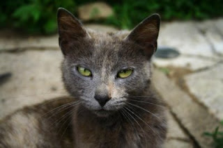 Mama Cat