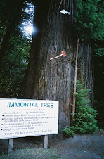 The Immortal Tree