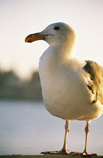 Our favorite seagull