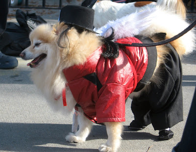 Brooklyn Halloween Parade Doggies on Parade For Brooklyn