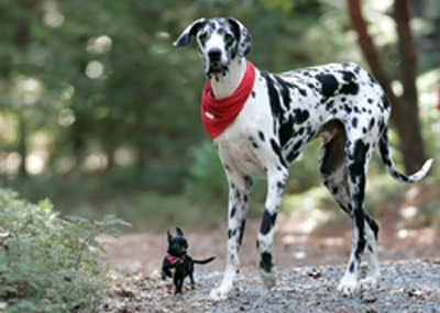 Der laut guinness buch der rekorde größte hund der welt ist tot die