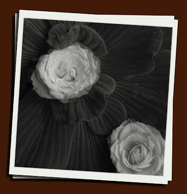 faux holga of water blossom: sonya's garden, cavite