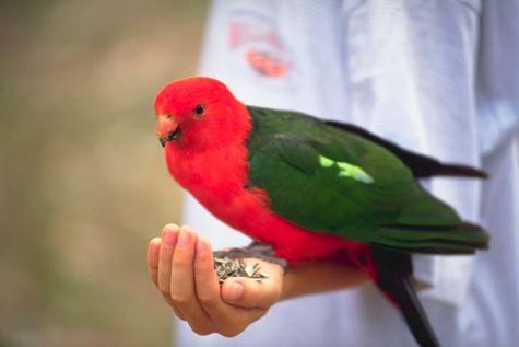 علمتني العصافير الحرية، للخيال عصافير showImage.jpg