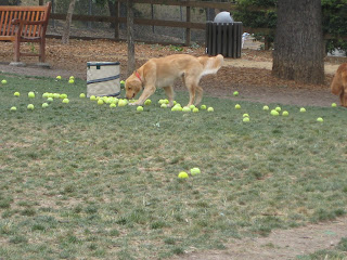 Danville California Dog Park