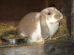 My gorgous rabbit