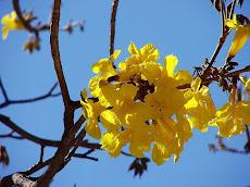 El Hatillo celebra el domingo el Día del Árbol con la recuperación del Parque de la Paz