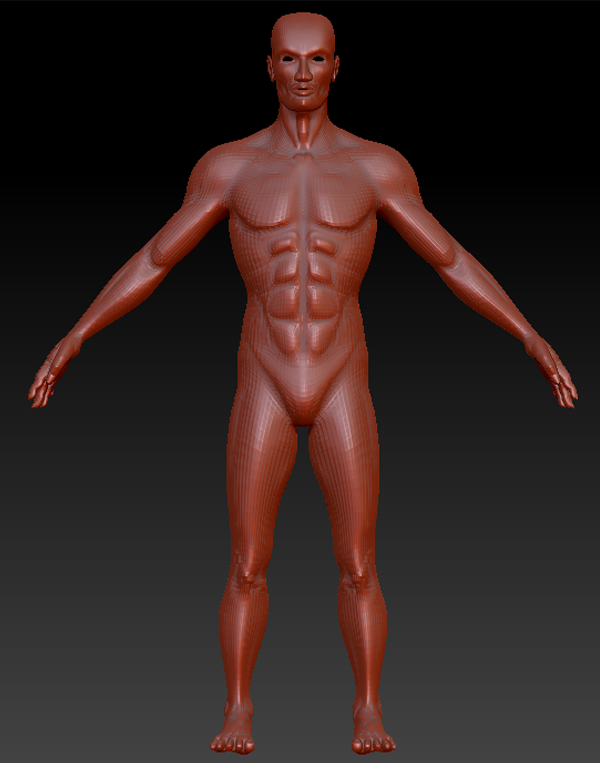 Graphyx Medley: 3d model-Human male anatomy