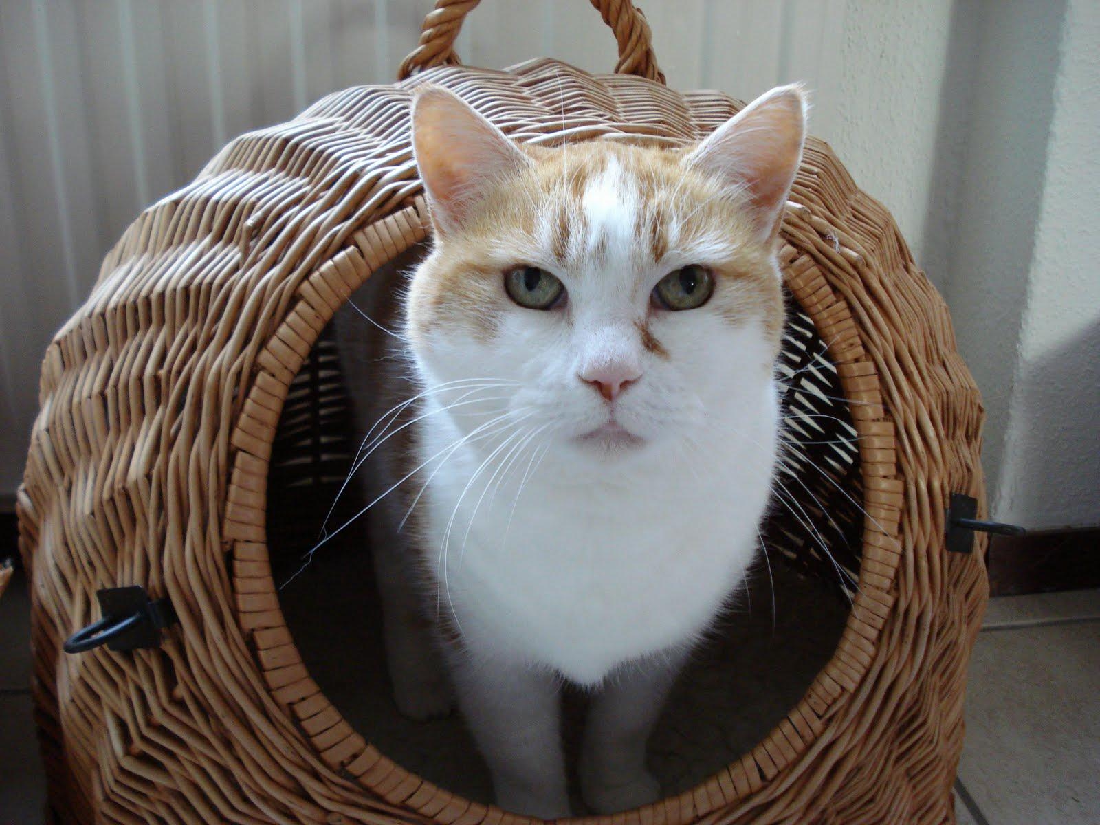 Kat & ko: mei 2010