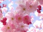 pinky,,flowers,,
