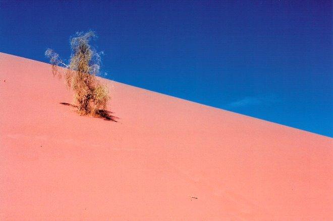 Duna en la Zona Red Sand del desierto Wadi Rhum