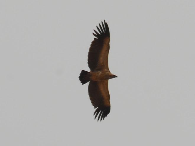 Al acecho en la Witsand Nature Reserve