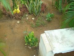 Primera Inspeccion o recorrido de las instalaciones de la Escuela Primaria Bolivariana San José