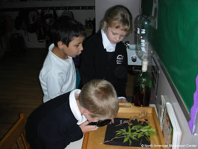 Choosing Right NAMC Montessori School as a Teacher children study botany