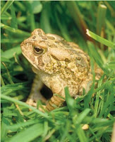 NAMC montessori classroom nature walk frog in grass