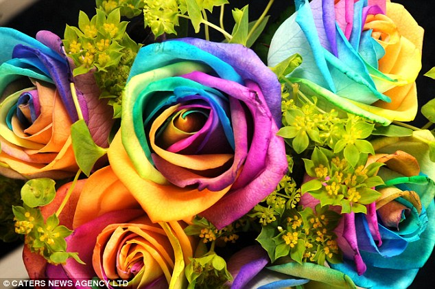 happy rose day quotes. The spectacular rainbow rose