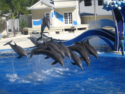 Dolphin Show wallpapers