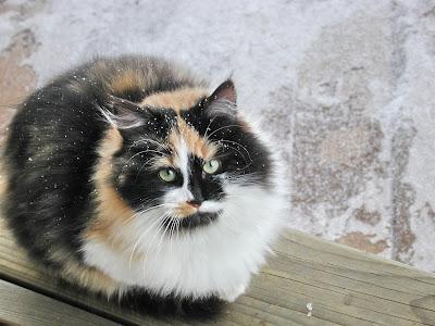 Petite neige sur moppette charmante chatte d for A poil a la maison