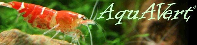AquAVert - Aquapaisagismo consciente
